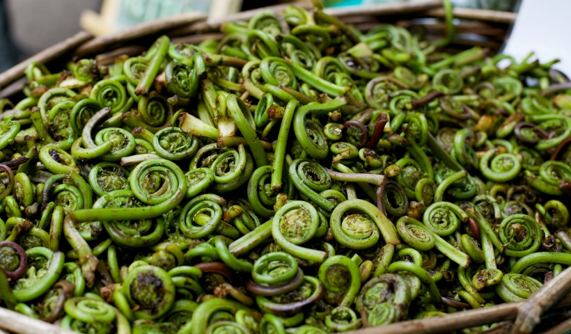 Fiddlehead Cashew Stir Fry
